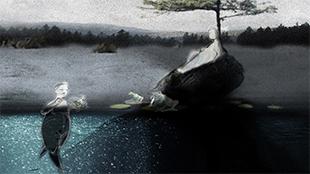 charles-et-les-grenouilles-vg